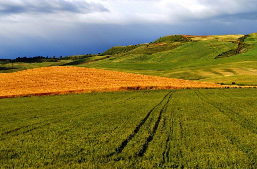 L'AGRICOLTURA IN BASILICATA AL TEMPO DEL COVID