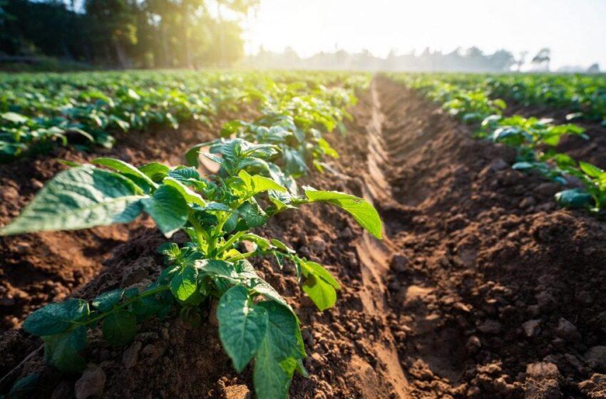 VAL D'AGRI: IN ARRIVO CONTRIBUTI PER L'AGRICOLTURA